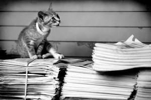 kat op stapel kranten