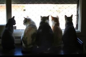 katten voor het raam