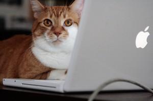 kat Toby achter een macbook
