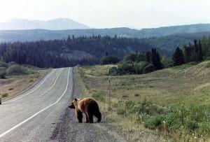 Sociale media en beren op de weg