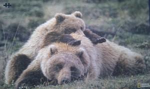Puzzel met beren