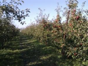 appelgaard