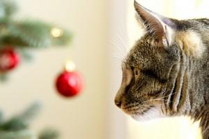 kat bij kerstboom