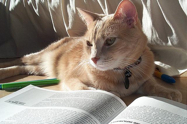 kat 'leest' boek in het zonnetje