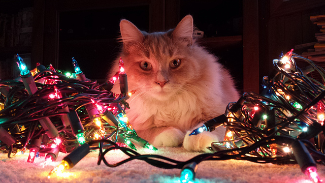 Lenny and the Christmas lights