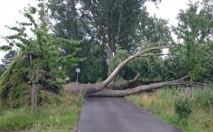 boom op weg